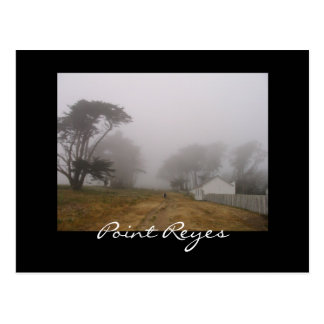 Foggy Point Reyes Postcard