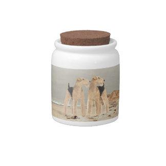 Foggy Seaside Candy Jars