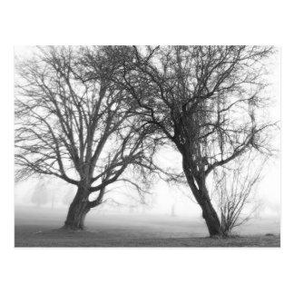 Foggy Trees Black & White Postcard