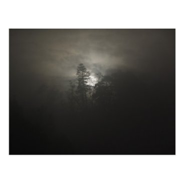 seasonals Foggy woods postcard