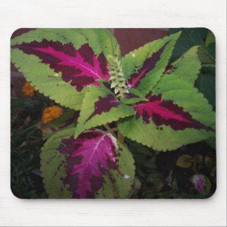 Foilage Plant#2 Mouse Pad