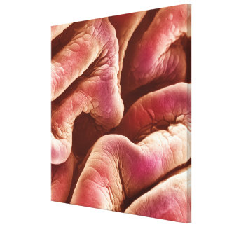 Folds of the human bladder epithelium canvas print