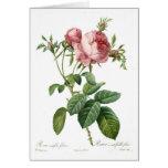 Foliacea del centifolia de Rosa Tarjeta De Felicitación