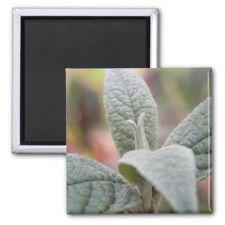 Foliage - Butterfly Bush 2 Inch Square Magnet