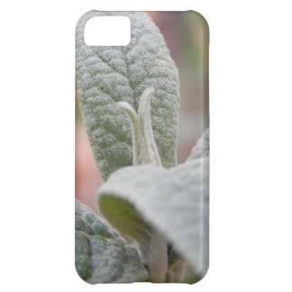 Foliage - Butterfly Bush iPhone 5C Cases