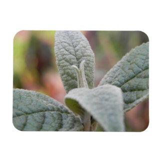 Foliage - Butterfly Bush Rectangular Photo Magnet