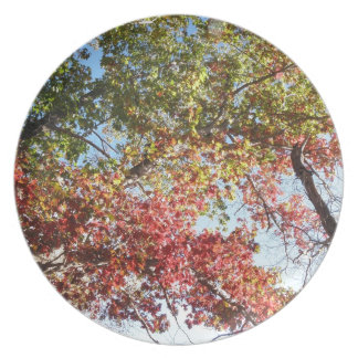 Foliage in CT Party Plates