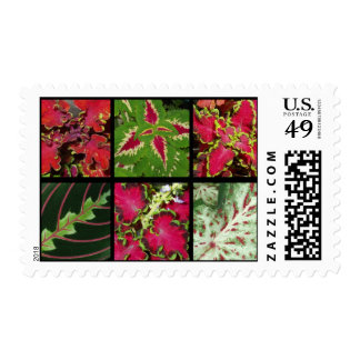 Foliage - Red And Green Postage Stamp