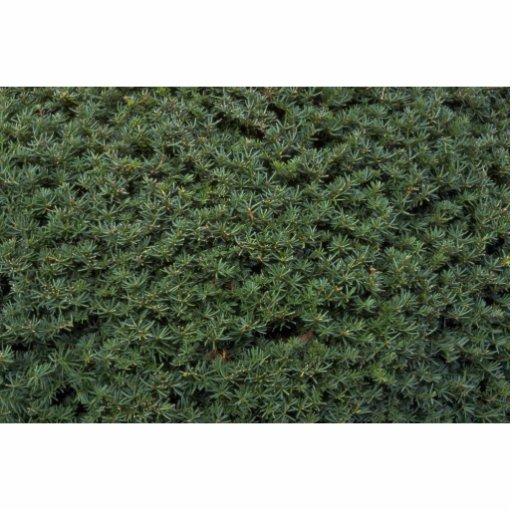 Foliage texture standing photo sculpture