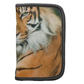 Folio anaranjado de la cartera del tigre planificador