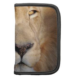 Folio de la cartera de las imágenes del león planificadores