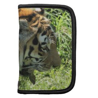 Folio del carrito del tigre organizadores