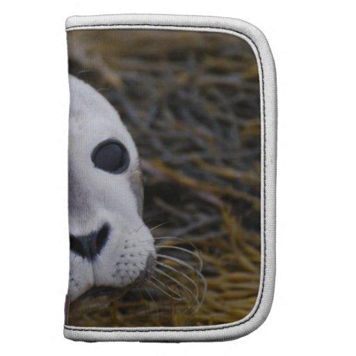 Folio dulce de la cartera de la cría de foca organizadores
