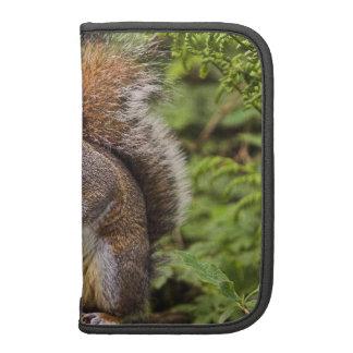 Folio gris Smartphone del carrito de la ardilla Planificadores