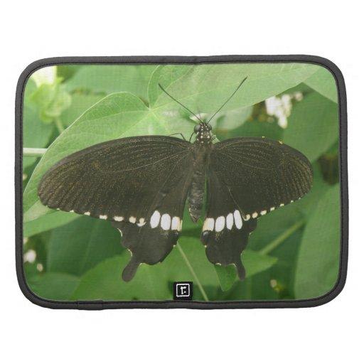 Folio mormón común del carrito de la mariposa organizador