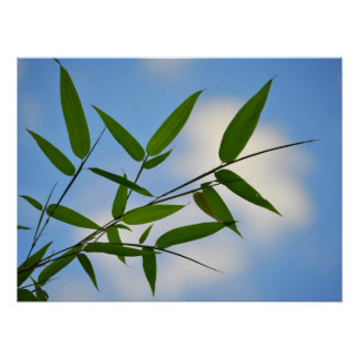Follaje de bambú contra un cielo azul póster