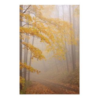 Follaje de la niebla y del otoño, Great Smoky Moun Impresión Fotográfica