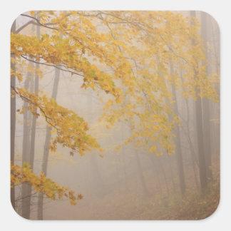 Follaje de la niebla y del otoño, Great Smoky Pegatina Cuadrada