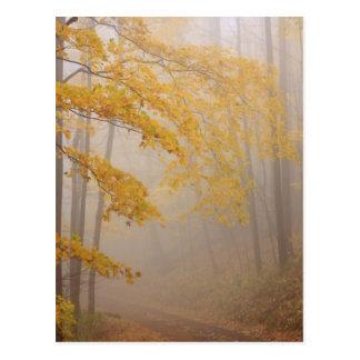 Follaje de la niebla y del otoño, Great Smoky Postal