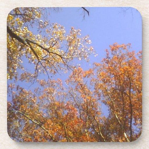 Follaje de otoño 1 posavasos de bebida