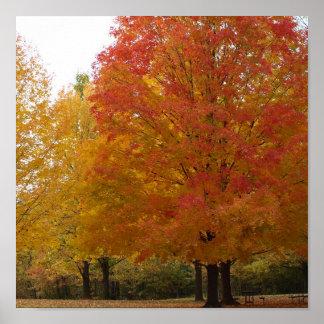 Follaje de otoño 1 póster