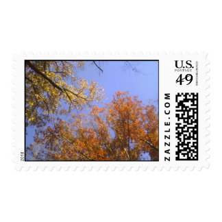 Follaje de otoño 1 franqueo
