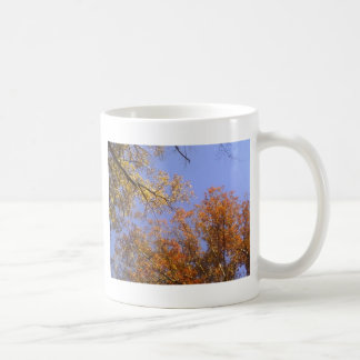 Follaje de otoño 1 tazas de café