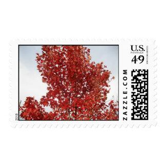 Follaje de otoño 2 sello