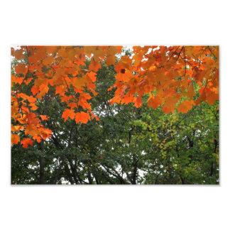 Follaje de otoño, área de Boston, foto 12x8