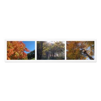 Follaje de otoño, Boston y Cambridge, foto 30x7.5