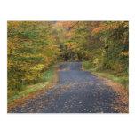 Follaje de otoño del borde de la carretera, postales