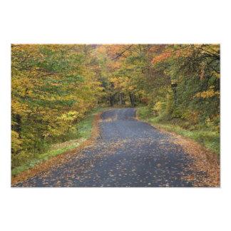 Follaje de otoño del borde de la carretera Vermon Fotografías