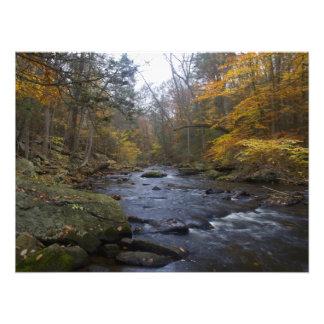 Follaje de otoño en el río negro - NJ escénico Fotografía