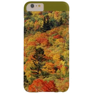 Follaje de otoño funda barely there iPhone 6 plus