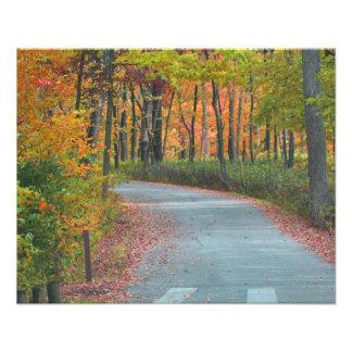 Follaje de otoño fotografia