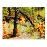 Follaje de otoño, rastro de Jemez Mt., nanómetro Postales