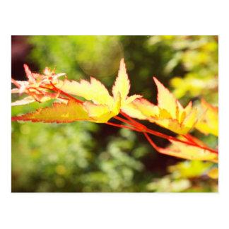 Follaje de otoño tarjetas postales