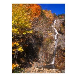 Follaje de plata de la cascada postal