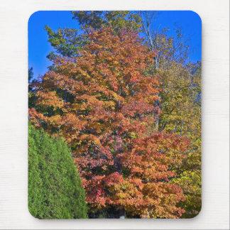 Follaje de Vermont del árbol de arce Alfombrilla De Raton