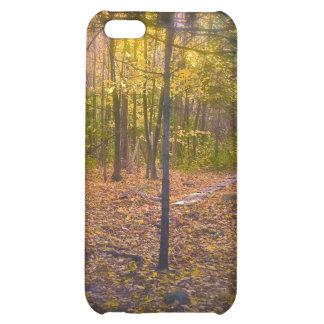 Follaje de Vermont del rastro del bosque