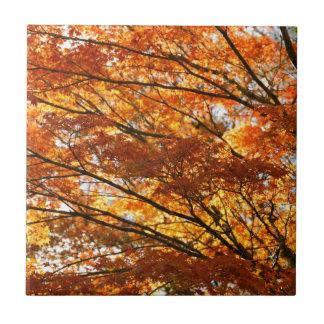 Follaje del árbol de arce azulejo cuadrado pequeño