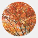 Follaje del árbol de arce pegatina redonda