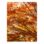 Follaje del árbol de arce tarjetas postales