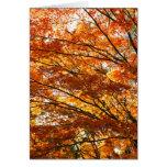 Follaje del árbol de arce tarjetón