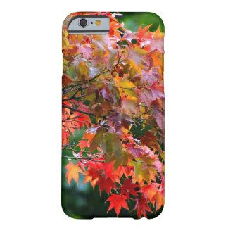 Follaje del arce del otoño funda barely there iPhone 6