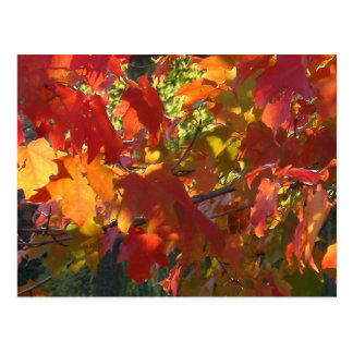 Follaje del otoño - Boston mA Postales