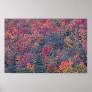 Follaje del otoño de un bosque de madera dura mezc poster