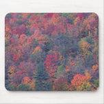 Follaje del otoño de un bosque de madera dura mezc alfombrilla de ratón