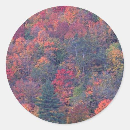 Follaje del otoño de un bosque de madera dura pegatina redonda