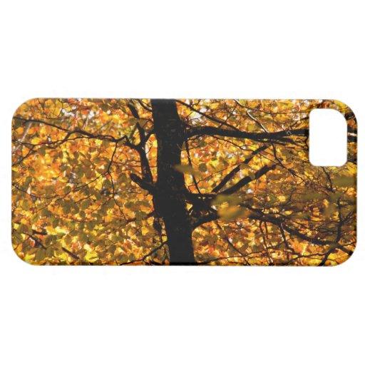Follaje del otoño iPhone 5 carcasa